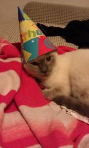 Mocha loves a good party