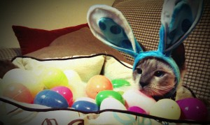 Mocha as the Easter Bunny