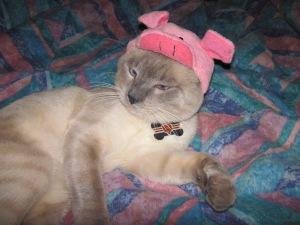 Mocha's a piggy