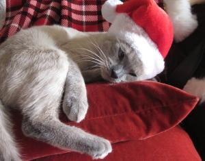 Mocha loves Christmas