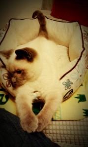 Baby Mocha