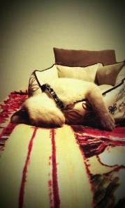 Snore Mocha